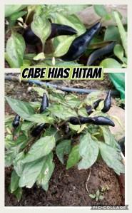 Cabe Hias Hitam