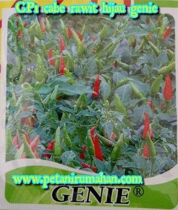 cp1-cabe-rawit-hijau-genie