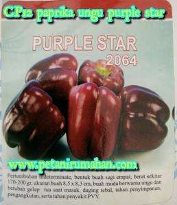cp12-paprika-ungu-purple-star