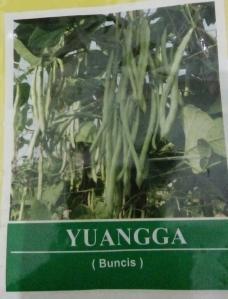 kacang buncis yuangga