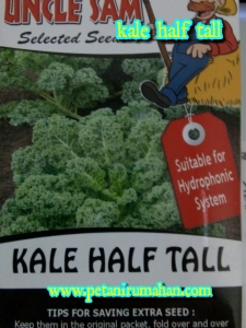 kale-hijau