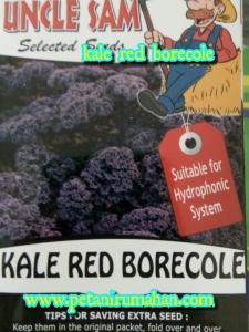 kale-merah