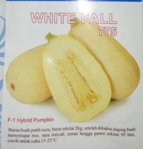 labu hibrida white fall