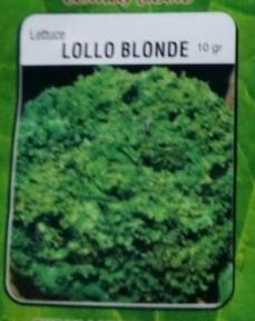 lettuce-lollo-blonde-rosa