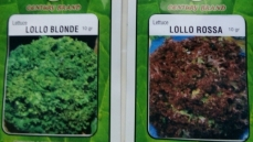 lettuce-lollo-blonde-rosa