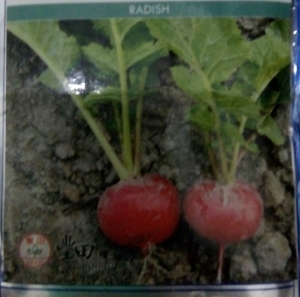 lobak merah radish