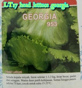 lt17-head-lettuce-georgia