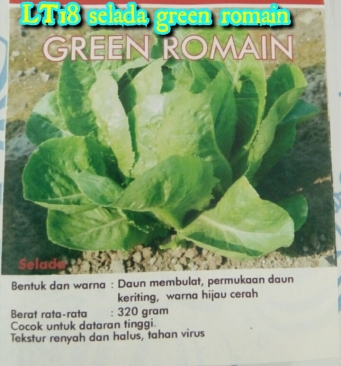 lt18-selada-green-romain