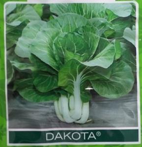 Pakchoy Dakota
