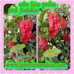 PhotoGrid_1466241255322[1]