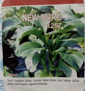 sawi bunga new burg