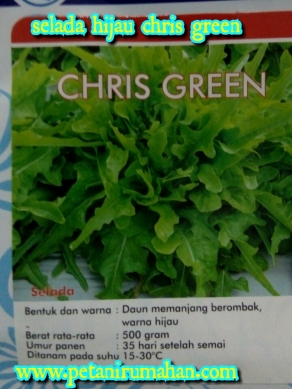 selada-chris-green