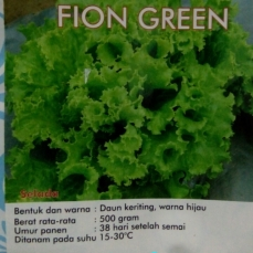 selada-fion-green