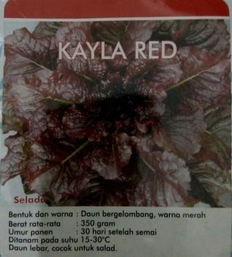 selada Kayla red