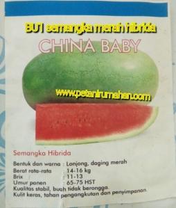 semangka-merah-china-baby