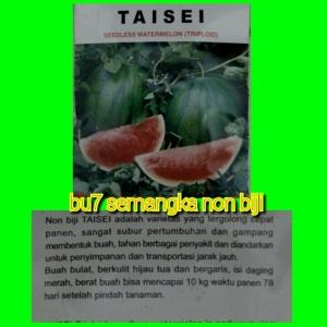 semangka-non-biji