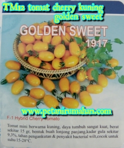 tm12-tomat-cherry-kuning-golden-sweet