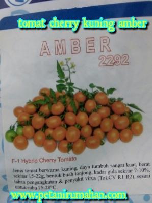 tomat-amber