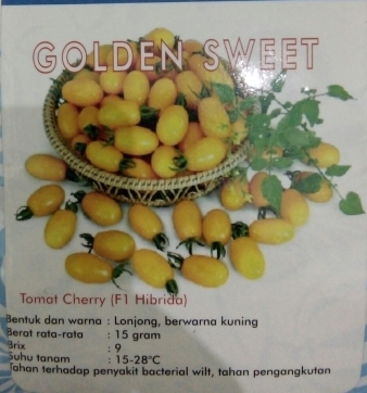 Tomat Cherry Kuning golden sweet