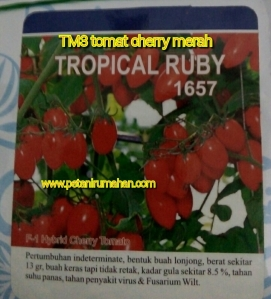 tomat-cherry-tropical-ruby