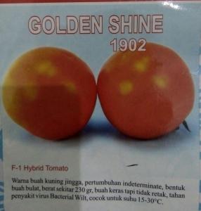 tomat hibrida golden shine