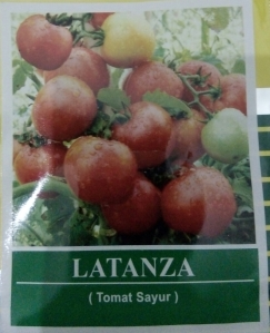tomat sayur latanza