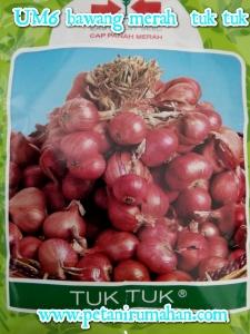 um6-bawang-merah-tuk-tuk