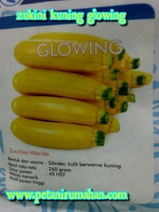 zukini-kuning-glowing