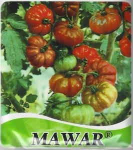 Tomat sayur dengan ciri khas berbentuk belimbing. rasa agak asam sehingga cocok buat sambal. jumlah buah kira-kira 20 buah/kg. Umur panen 70-75 hst. produksi 2-3 kg/tnaman. toleran layu bakteri.