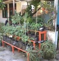 tanaman 2