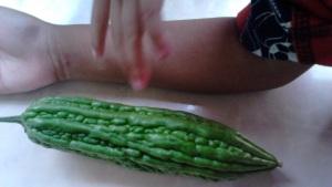 Buah Pare yang baru dipanen dibandingkan dengan tangan anak saya yang umur 4 tahun..