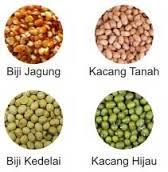 jagung, kacang tanah, kedelai dan kacang hijau