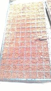 Penyemaian menggunakan media cocopeat, benih tanpa perlakuan jadi langsung disemai sedalah setengah senti meter