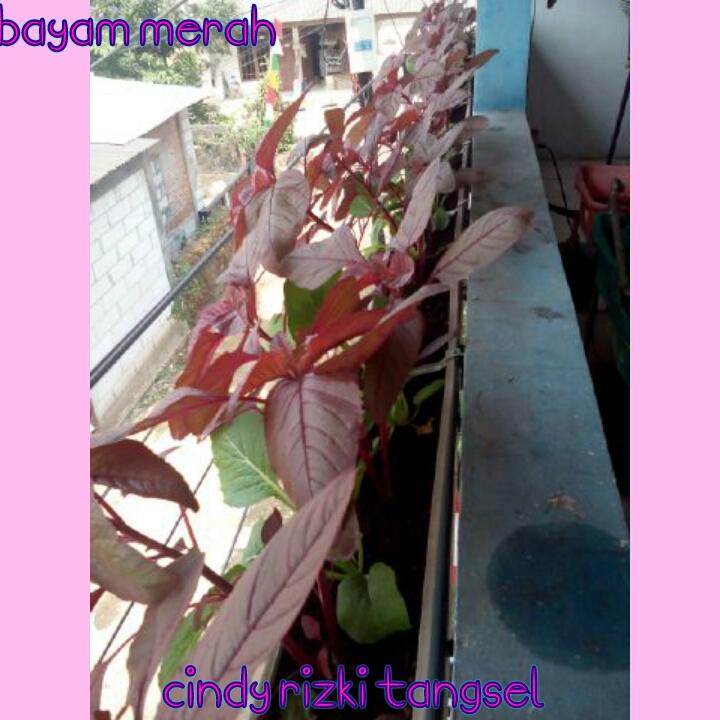 PhotoGrid_1463978095897