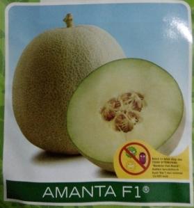 melon hibrida amanta f1