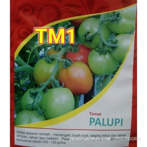 Tomat Sayur Palupi