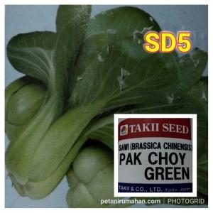 pakchoy green