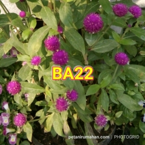 ba22 bunga kenop
