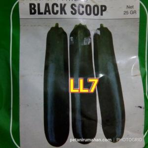 ll7 zukini black scoop