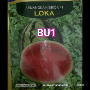 bu1 semangka loka
