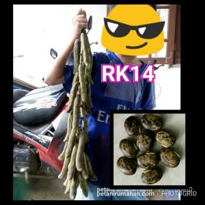 rk14 kara benguk