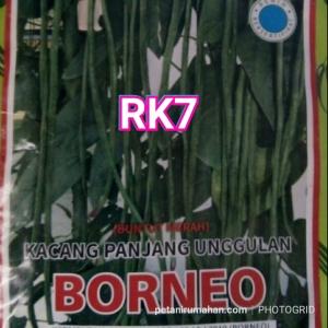 rk7 kacang panjang borneo