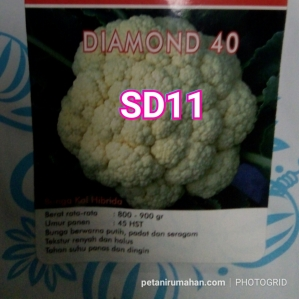 sd11 bunga kol diamond