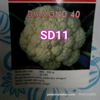 sd11 bunga kol diamond