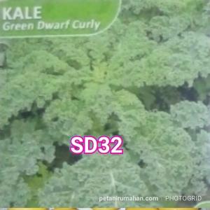 sd32 kale keriting