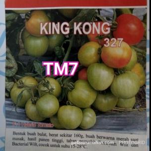 tm7 tomat kingkong