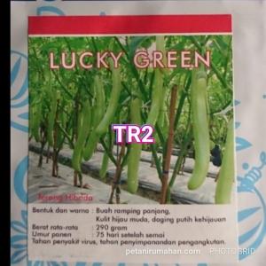 tr2 terong hijau hibrida lucky green