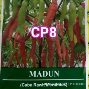 cp8 madun
