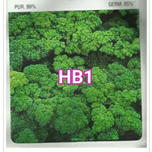 hb1 parsley moss curled