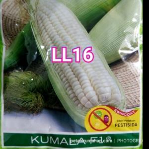 ll16 kumala